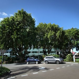 Removal of heritage listed Fig Tree from South Brisbane campus